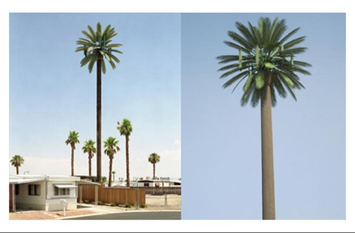 Camouflaged Palm Tree Poles and Lamp Poles